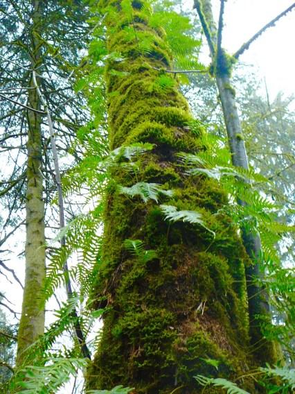 Rainforest tree (Photo © 2017 by V. Nesdoly)