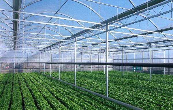 Комплексы высота 7,7 м. - промышленные и фермерские теплицы