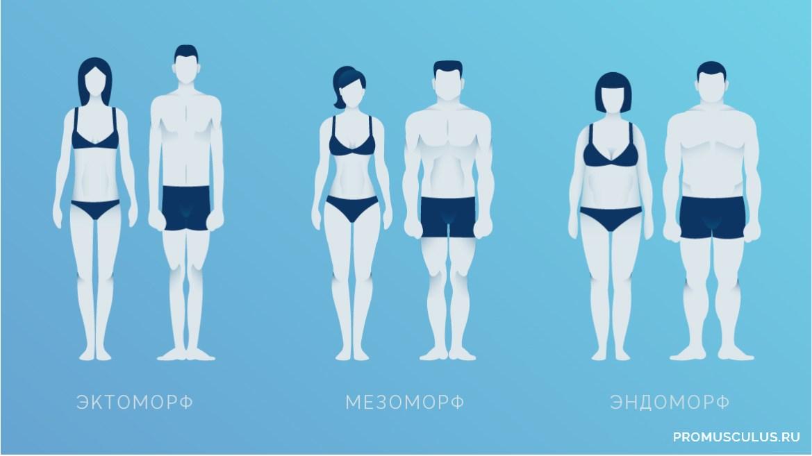 Типы телосложения: как правильно питаться и тренироваться