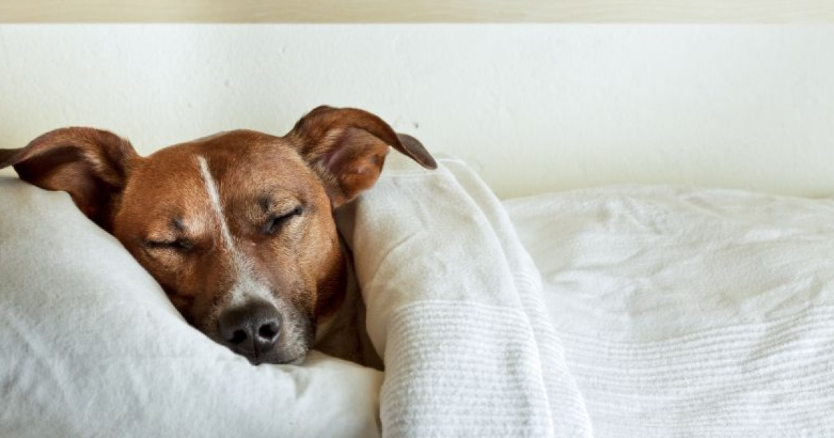Temperaturas mais baixas podem causar doenças nos cachorros