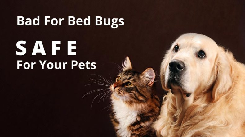 Our chemical bed bug treatments are safe for pets