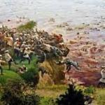 黒龍江事件でのロシア兵による中国人虐殺