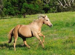 強制された「正しい」歴史認識ーそれは馬なのか鹿なのか?