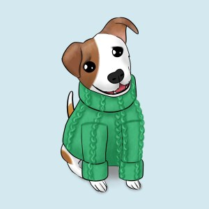 Jack Russell in a jumper