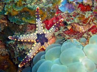 Funky Starfish and Bubble Coral