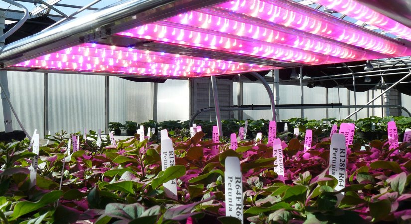 Indoor Farming photosynthesis