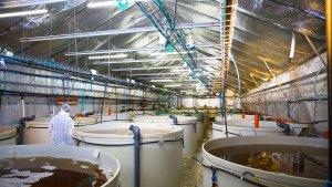 Organic Aquaculture, Aquaculture Technology