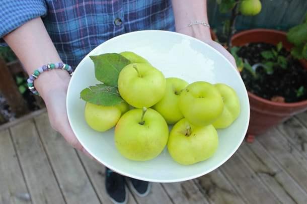 apples | ProperFoodie