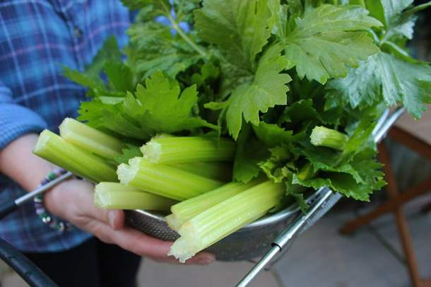 Celery leaves | ProperFoodie
