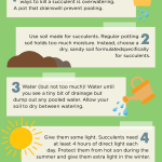 Succulent Plant Care Growing Tips Properly Rooted