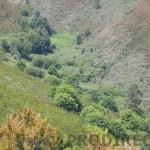 PD0106 – Quinta das Fontes da Serra
