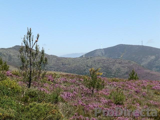 Quinta da Tojeira, Pampilhosa