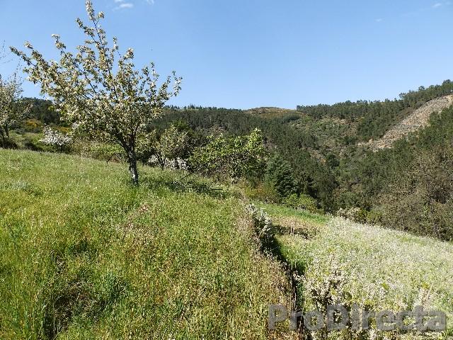 Land in Arganil farm