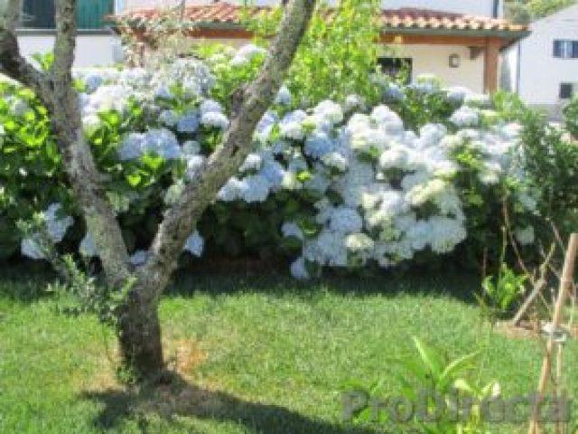31. Garden