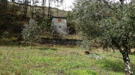 Quintinha Chão do Álamo - PD0273 at 3320 Pampilhosa da Serra, Portugal for 12500