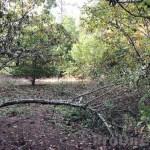 Quinta da Nogueira - PD0322