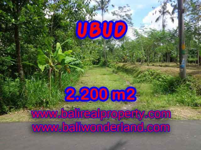 Land in Ubud Bali for sale, nice view in Ubud Tegalalang Bali – TJUB408