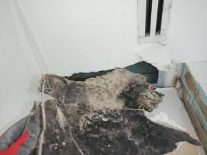 Mold Restoration Required