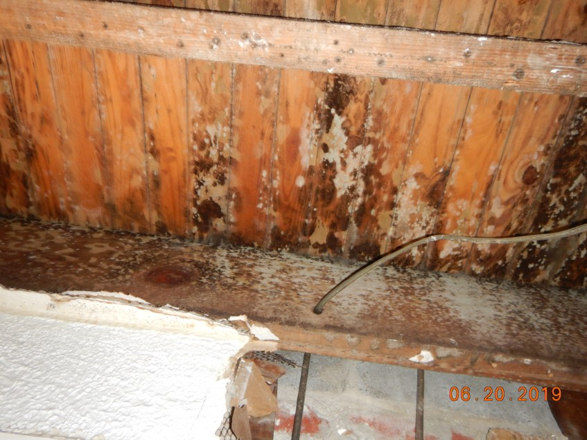 Mold Remediation Required