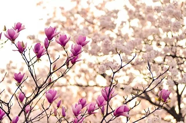 Весна на польском языке