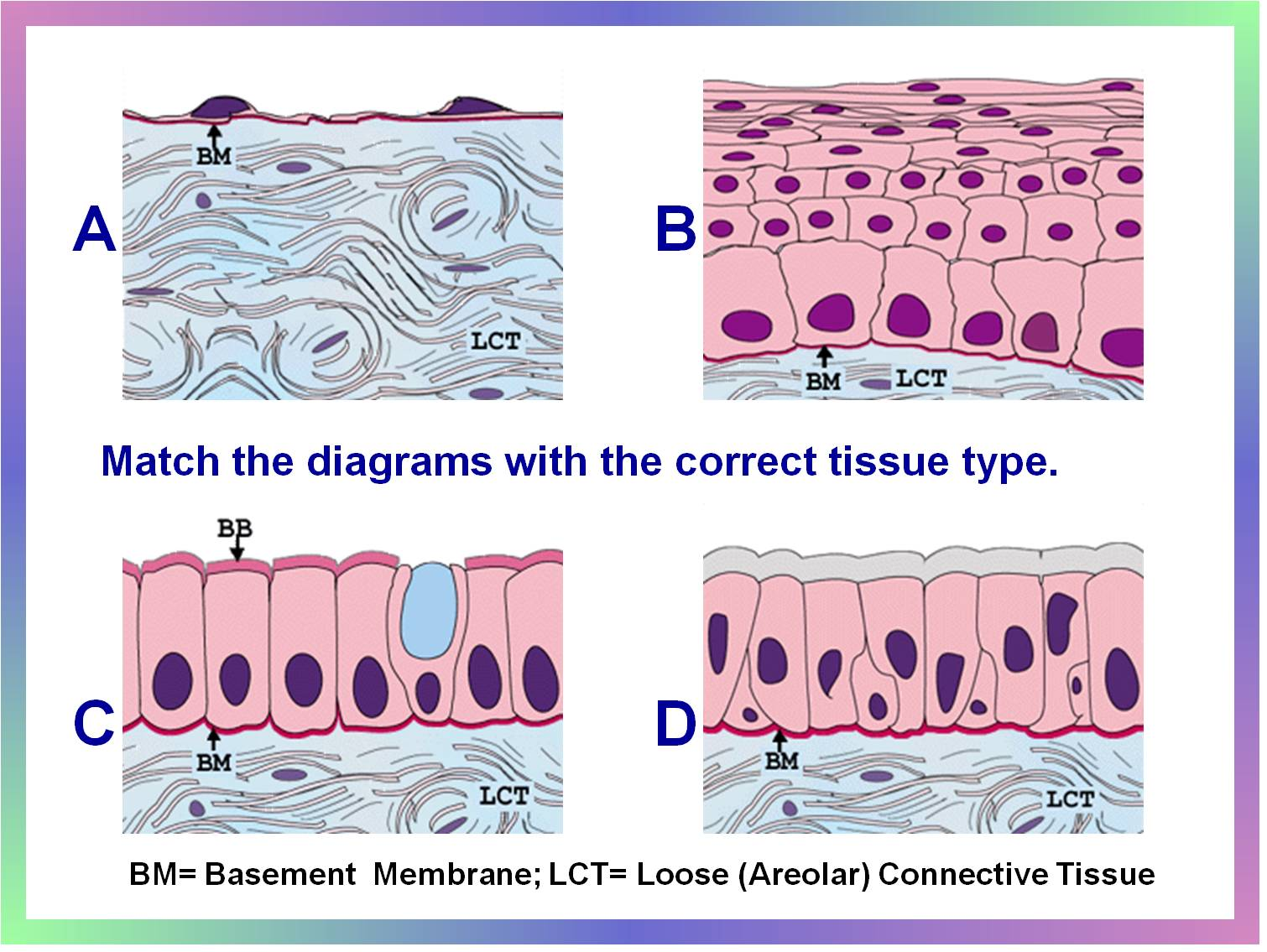Epithelial Tissue Flashcards By Proprofs