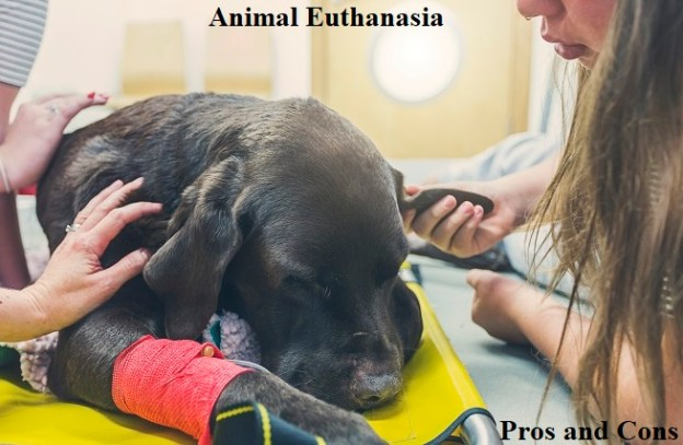 pros and cons of animal euthanasia