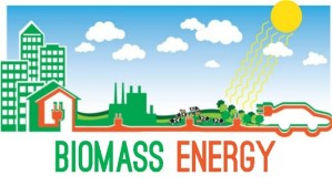 Read more about the article Pros and Cons of Biomass energy