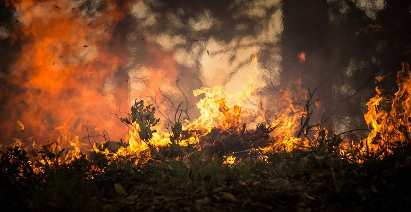 Pros and Cons of Forest fires