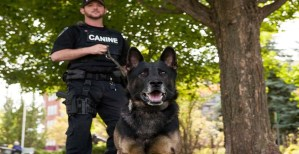 Pros and Cons of K-9 Unit
