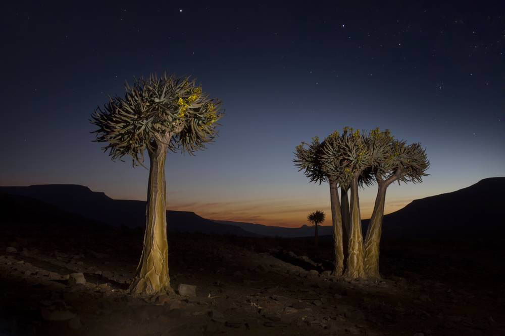Quiver trees Biedouw_travel photography