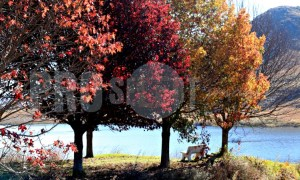 Autumn display oaks | ProSelect-images