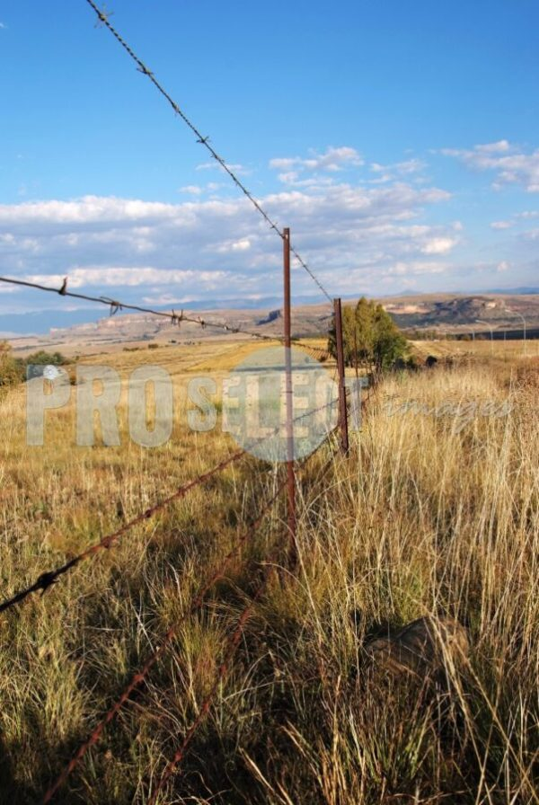 Barbed wire fence | ProSelect-images