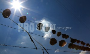 Birds nests on wire | ProSelect-images