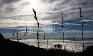 Black Grass silhouette | ProSelect-images