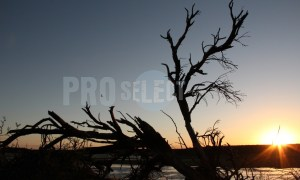 Branches at dam silhouette | ProSelect-images