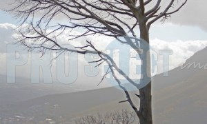 Dead trees Cape Town | ProSelect-images