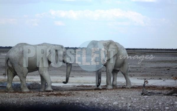 Etosha elepphants | ProSelect-images