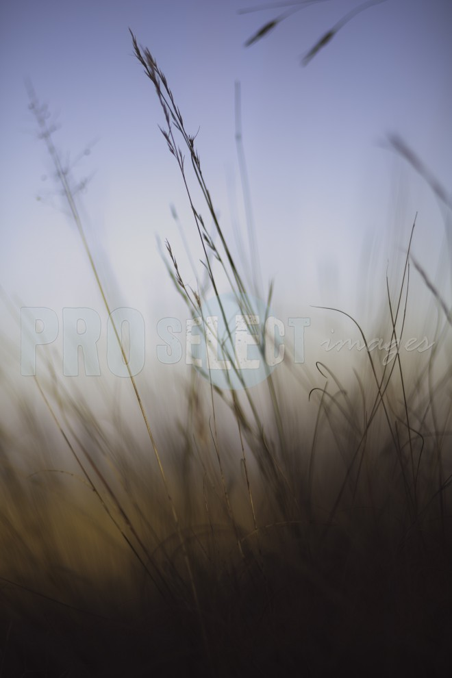 Grass in foggy morning | ProSelect-images