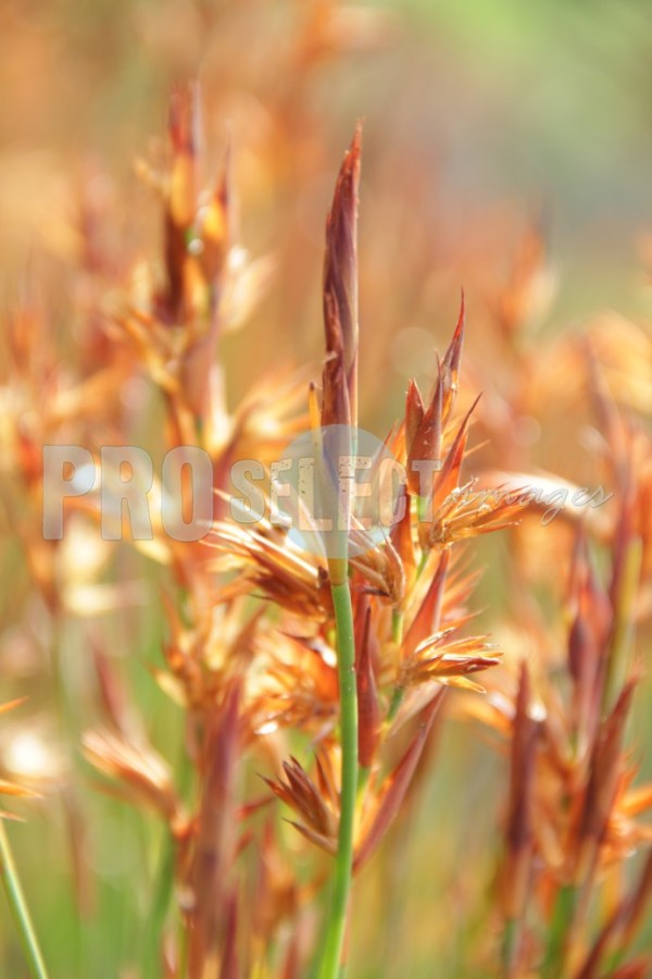 Grass on Table Mountain   ProSelect-images