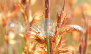 Grass on Table Mountain | ProSelect-images