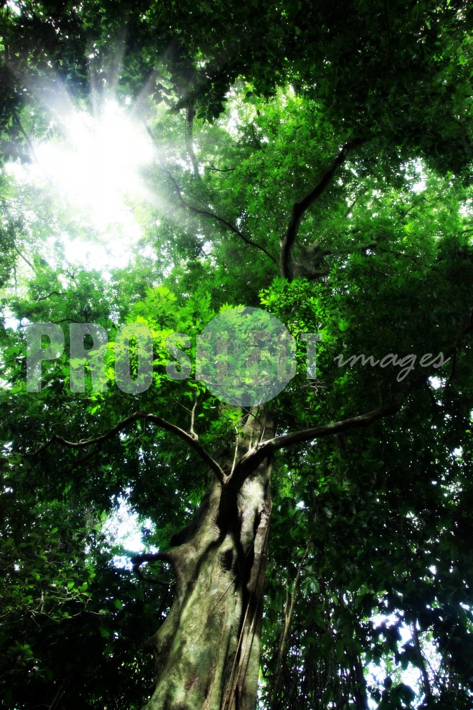 Indigenous forest Eshowe | ProSelect-images