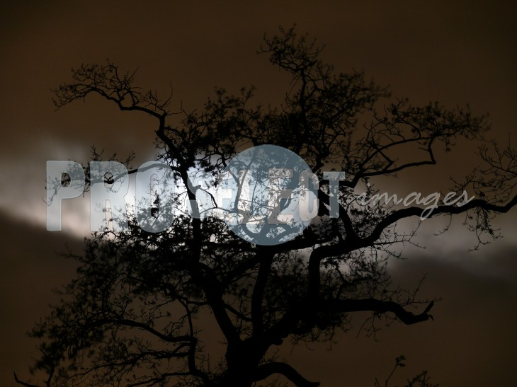 Moon through tree silhouette | ProSelect-images