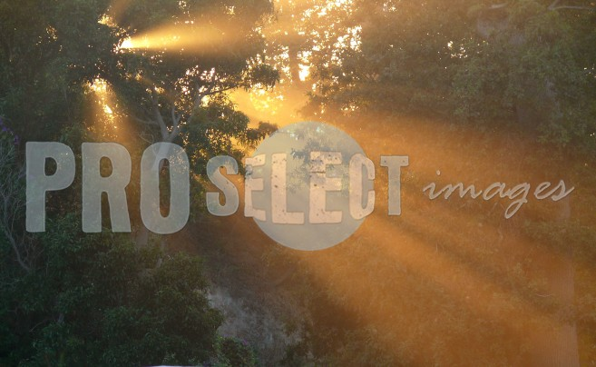 Sunbeams through indigenous trees | ProSelect-images