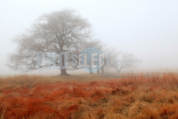 Willow trees in winter | ProSelect-images
