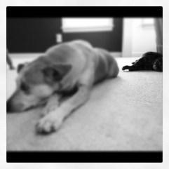 Dali and Scotch lounging