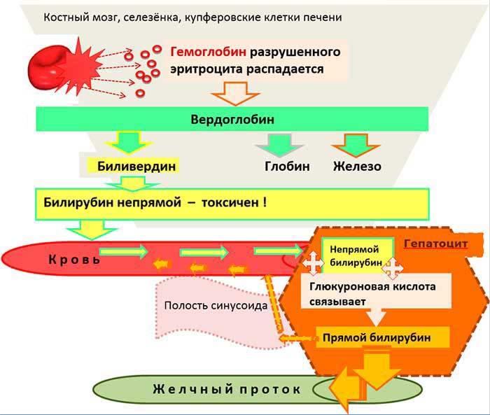 Препараты от повышенного билирубина