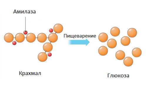 amilază ridicată și pierdere în greutate