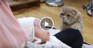 Котам показали новорожденного ребеночка. Их реакция вызовет у вас улыбку!
