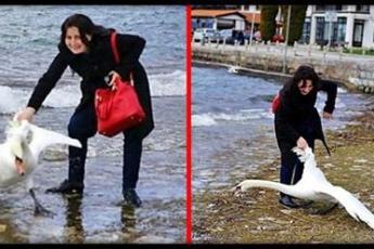 Ради эффектной фотографии, женщина достала лебедя из воды и… Убила его!