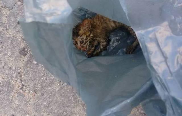 Женщина заметила на дороге полиэтиленовый пакет. Но когда она его развернула, то обомлела!